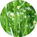 Huile Végétale Vierge d'Abyssinie / Huile végétale de Crambe 100 ml