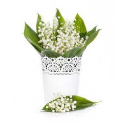 LILY OF THE VALLEY Fragrance standard 50 ml