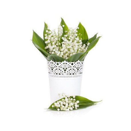 LILY OF THE VALLEY Fragrance standard 10 ml