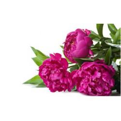 PIVOINE & FLEUR D'ORANGER Fragrance standard 10 ml  DLUO : 04/2017