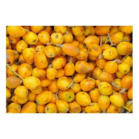 Huile végétale vierge de MARULA 100 ml