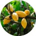 Beurre Végétal de CACAO désodorisé 250 gr 'en petites pastilles'