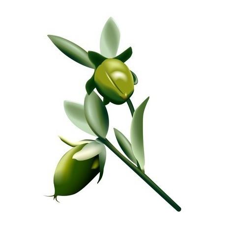 Huile végétale vierge de JOJOBA (qualité Golden) 100 ml