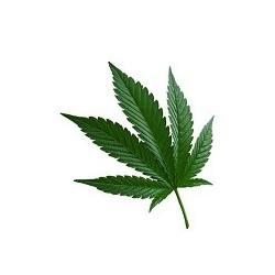 Huile végétale vierge de CHANVRE BIO 100 ml