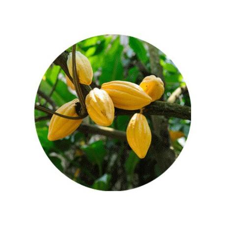 Beurre Végétal de CACAO Vierge 250 gr 'en pastilles'
