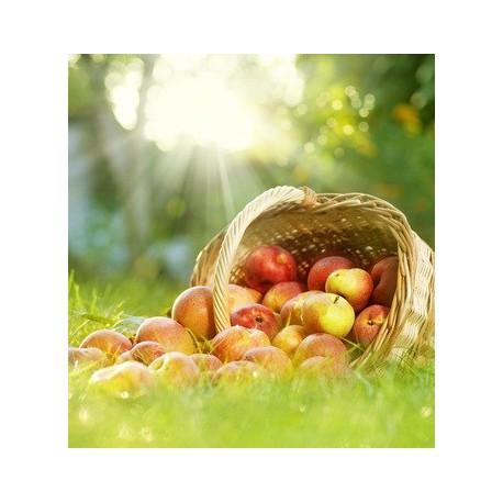Fruits du Verger (fragrance 'Premium' sans allergènes)