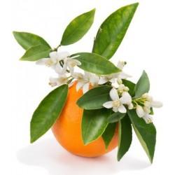 FLEURS D'ORANGER fragrance standard 10 ml