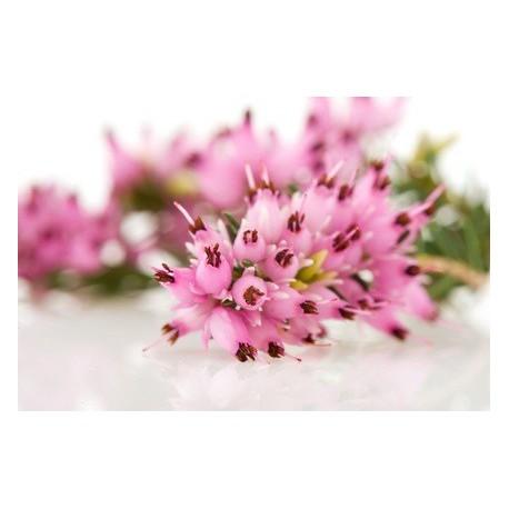 Fragrance sans allergène BRUYERE