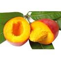 Beurre de Mangue 1 Kg