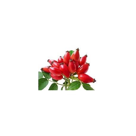 Huile végétale vierge de ROSE MUSQUÉE BIO 50 ml